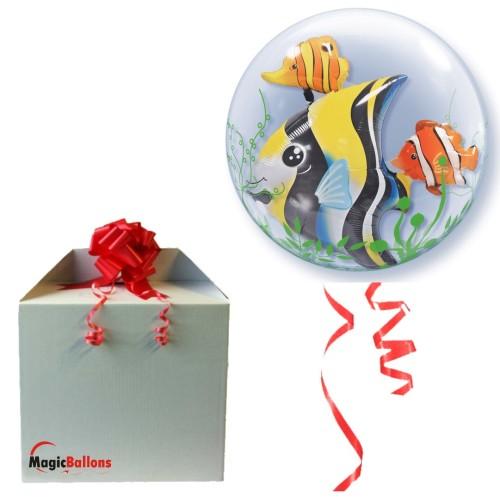 Seaweed Tropical Fish  in the box