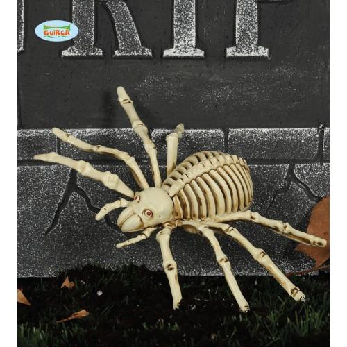 Spider skeleton